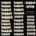 Garnitura de dinti, acrilat in 3 straturi - Eray Deluxe